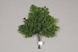 x018vv Green dried adiantum fern D10/20cm