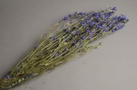 x019dn Dried blue delphinium branch H70cm