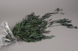 x021vv Green preserved eucalyptus nicoly H76cm
