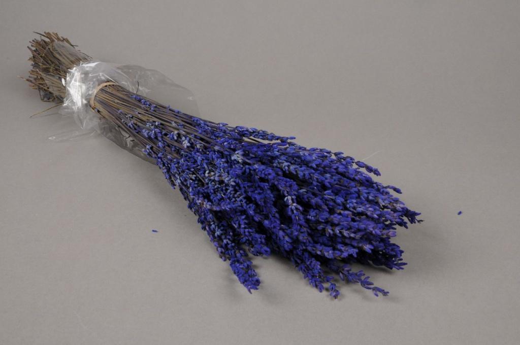 x022ab Botte de lavande préservée bleue H50cm