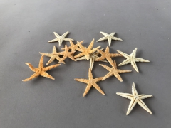 x024ma Pack of 100 white starfish