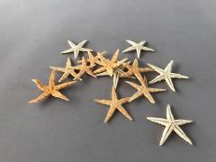 x024ma Pack of 100 white starfish