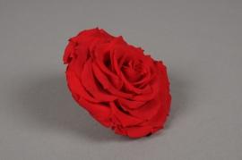 x025vv Boîte de 1 rose préservée rouge