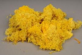 x027ab Mousse Islande jaune préservé 500g