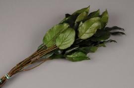 x028vv Botte de salal vert préservé H45cm