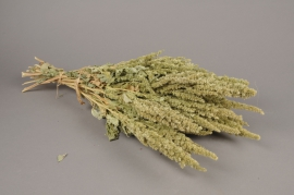 x029kh Amaranthe naturel séché H60cm