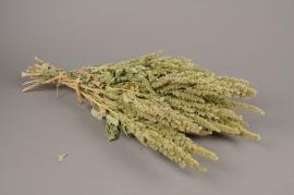 x029kh Dried amaranthus H60cm