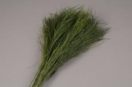x029vv Green preserved fern