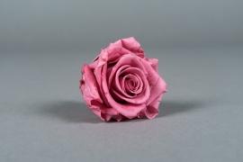 x031vv Boîte de 6 roses préservées parme