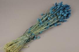 x032dn Phalaris séché bleu H70cm