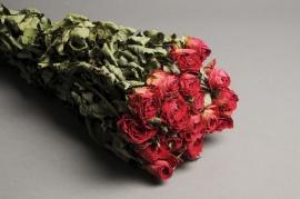 x033kh Botte de rose rouge séchée H57cm