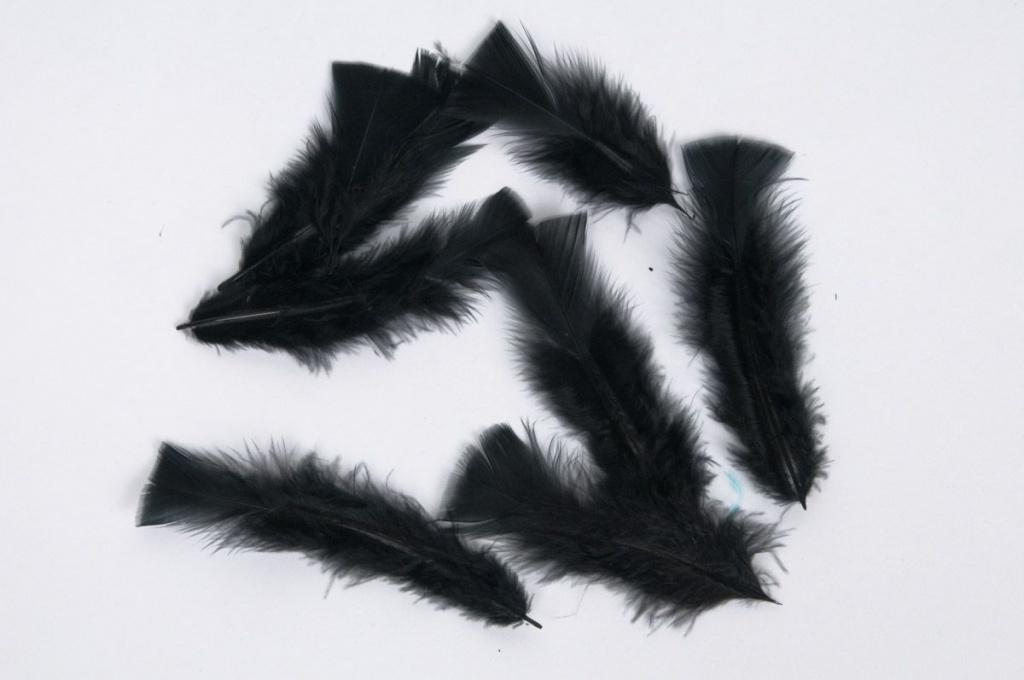 x034ci Boîte de plumes noires 40g