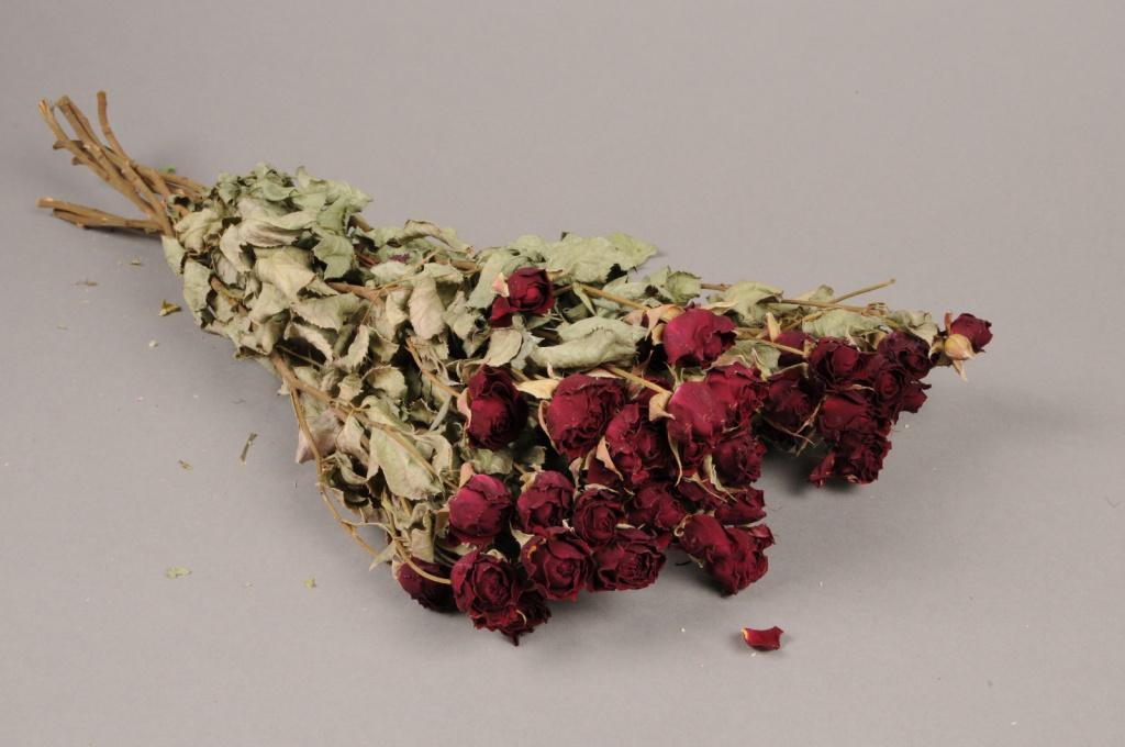 x034kh Botte de rose spray séchée H50cm