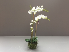 x035ee Pot of  white artificial phalaenopsis H80cm