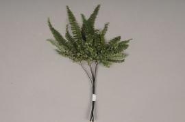 x035vv Green preserved fern D15/20cm