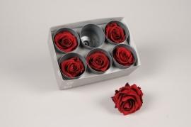 x037vv Boîte de 6 roses préservées bordeaux