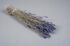 x038kh Blue natural dried lavander H40cm