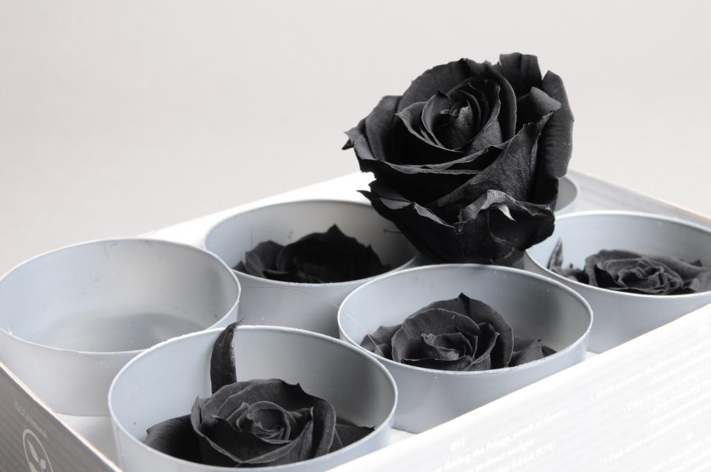 x038vv Box of 6 preserved black roses