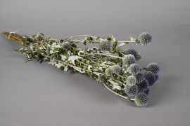 x039kh Echinops naturel séché H60cm