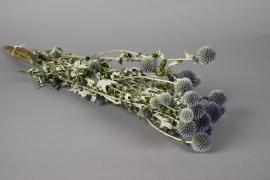 x039kh Natural dried echinops H60cm