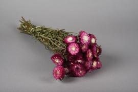 x040kh Botte d'immortelles rose séchées H46cm