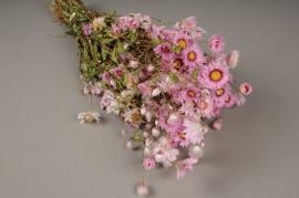 x041dn Botte de rodanthe rose naturelle séchée H40cm