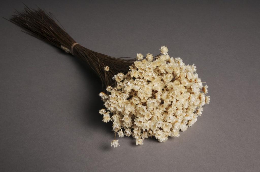 x043ab Bunch of natural dried glixia H50cm