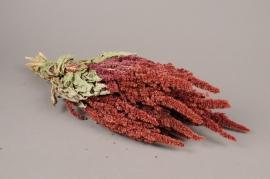 x043kh Amaranthe naturel séché H50cm