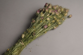 x044kh Natural dried nigella