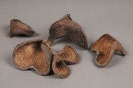 x045ec Pack of 10 natural badam nuts D8cm