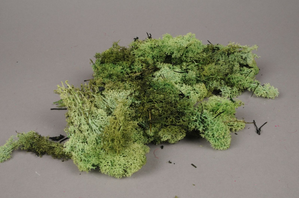 x046ab Green iceland preserved moss 500g