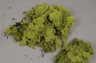 x047ab Green preserved iceland moss 500g