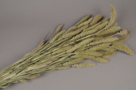 x048dn Natural dried foxtail H73cm