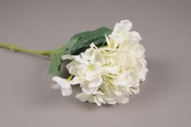 x049lp Hortensia artificiel crème H72cm