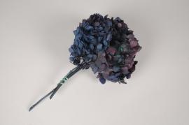 x052vv Hortensia préservé bleu aubergine H33cm
