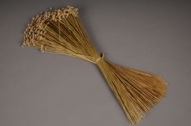 x054ab Natural dried amarelino H50cm