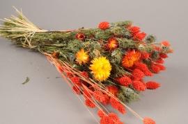 x055kh Bunch of orange dried flowers H50cm