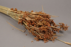x056dn Bunch of natural dried juncus H80cm