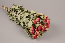 x056kh Botte de rose branchue séchée H50cm
