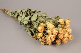 x057kh Botte de rose branchue séchée jaune H50cm