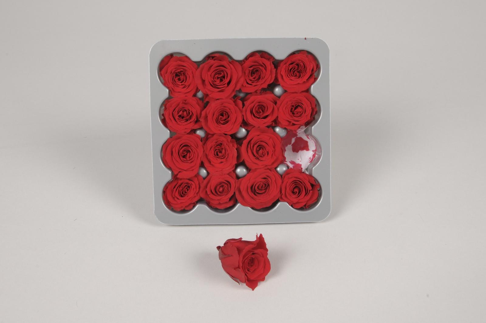 x057vv Boîte de 16 mini roses préservées rouges