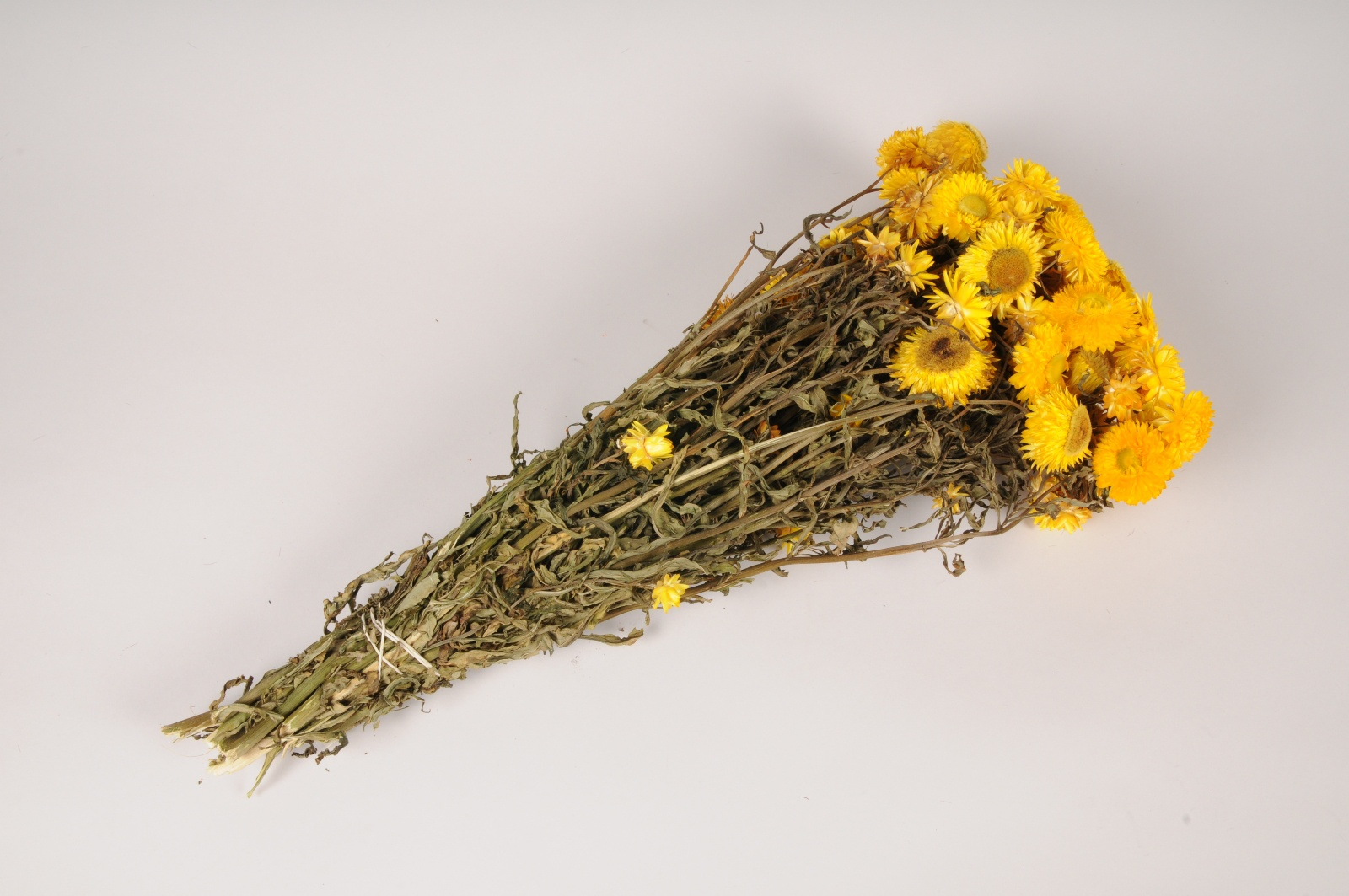 x058dn Immortelle séchée naturelle jaune H55cm