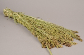 x058kh Botte de panicum naturel
