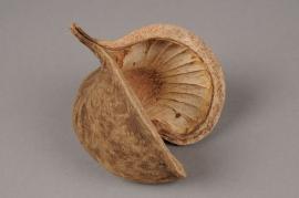 x061ec Paquet de 6 noix de bouddha naturel