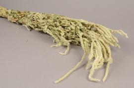 x061kh Dried caudatus amaranthus H60cm