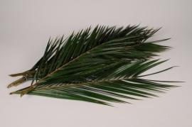 x061vv Set de 5 feuilles de palme stabilisées vertes H60cm