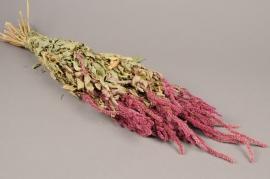 x062kh Dried caudatus amaranthus H60cm