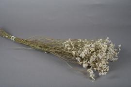 x063dn Limonium séché blanc H70cm