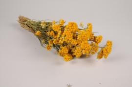 x063hm Lona séché naturel jaune H42cm