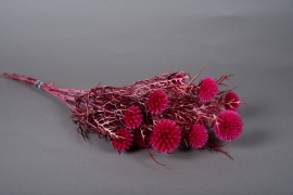x065dn Echinops préservé fuchsia D6cm H65cm
